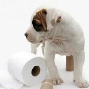 90573-280x190r1-puppy_toilet_paper
