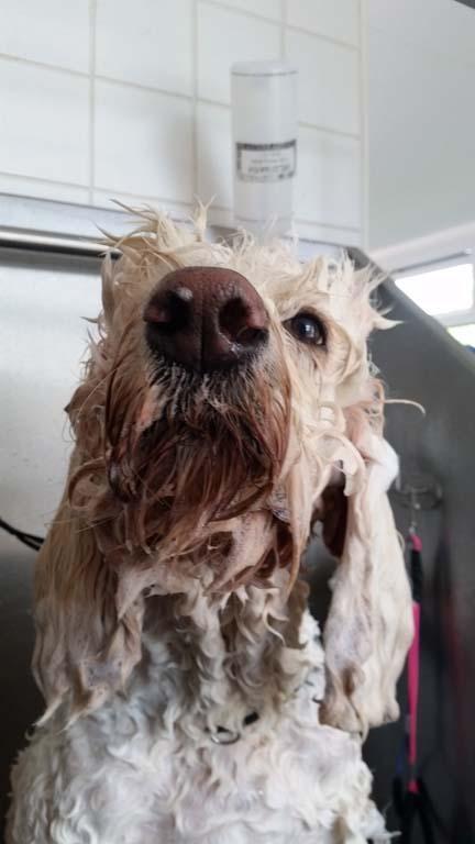 hairy dog grooming salon